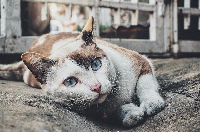 Geschikte mat voor katten en honden
